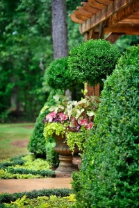 topiary and container design in macon ga